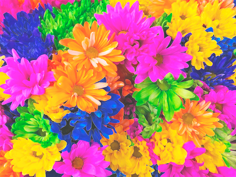 TenStickers. Multi-Colour Flower canvas. Flower canvas print which features a stunning image of a range of brightly coloured flowers. High quality materials used.
