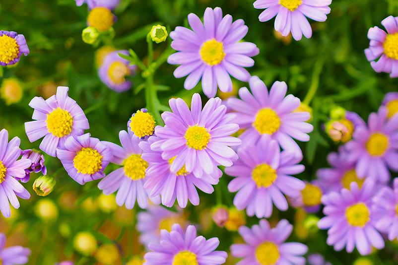 TenStickers. 녹색 초원 꽃 캔버스에 핑크 꽃. 노란색, 보라색 꽃 초원 캔버스 프린트의 사랑스러운 세트는 우아한 효과를 설치하고 공간에 보입니다. 원본, 내구성 및 무광택 마감.