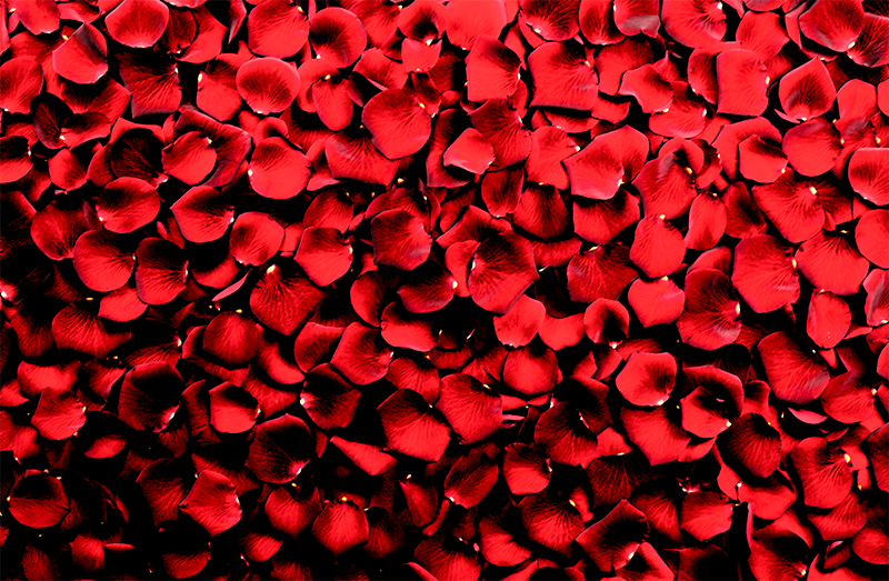 TenStickers. Red Rose Petals floral canvas. Rose canvas print which features an image of a pile of rose petals all coloured in a brilliant shade of red. High quality.