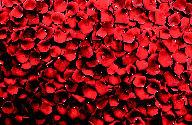 TenStickers. Cvetni listi rdečih vrtnic. Rožni tisk na platnu, na katerem je podoba kupa cvetnih listov vrtnic, obarvanih v briljantni rdeči odtenek. Visoka kvaliteta.