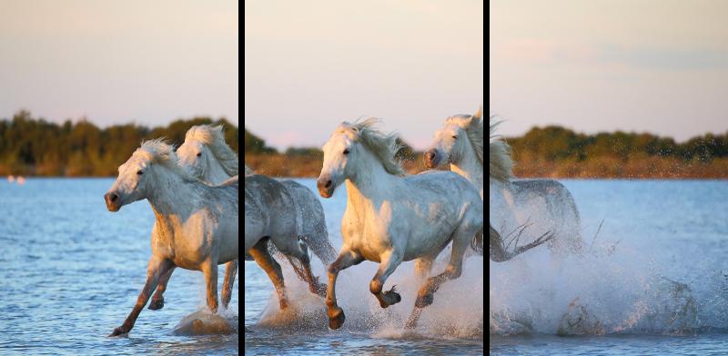 TenStickers. Heste galopperende tredobbelt lærred billeder. Hest lærredstryk, der har et fantastisk billede af en gruppe heste, der løber gennem en vandkrop. Vælg din størrelse.