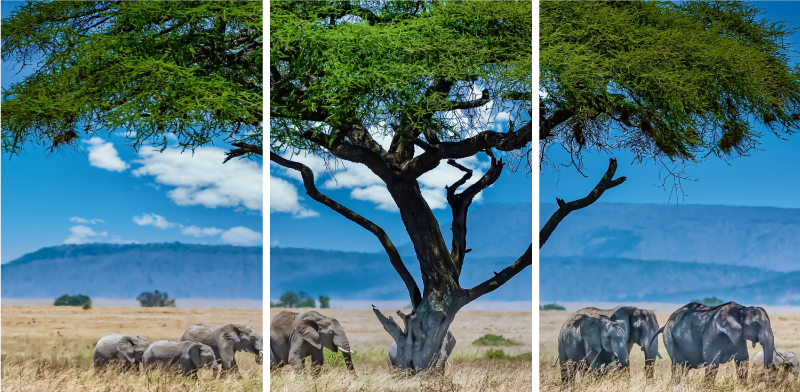 TenStickers. Elephant Savannah canvas art. Elephant canvas which features a stunning image of a herd of elephants walking across a savanna. High quality materials used.