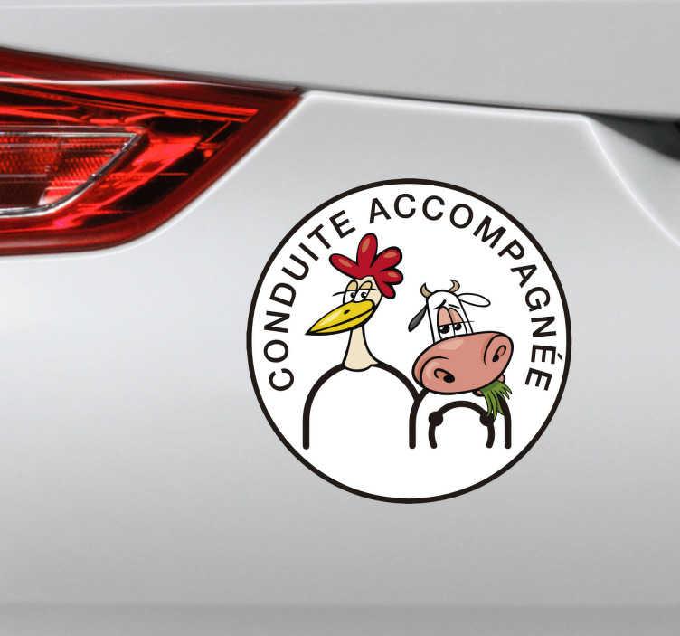 TenStickers. Sticker conduite accompagnée drôle. Décorez votre voiture à l'aide de ce sticker de conduite accompagnée humoristique qui représente une poule et une vache.
