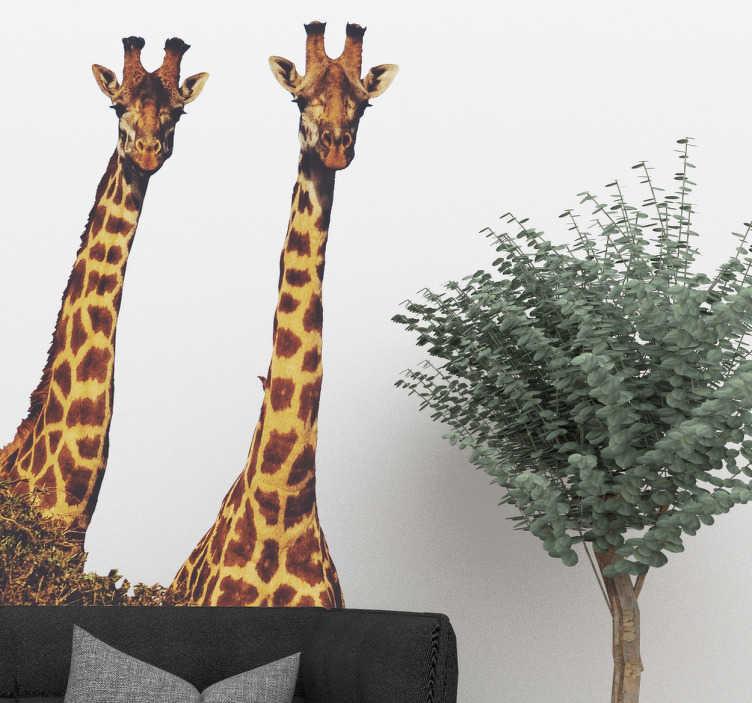 TenStickers. Muursticker giraffe realistisch. Een leuke muursticker met dieren. Deze realistische wanddecoratie met nieuwsgierige giraffes is perfect voor avontuurlijke mensen.