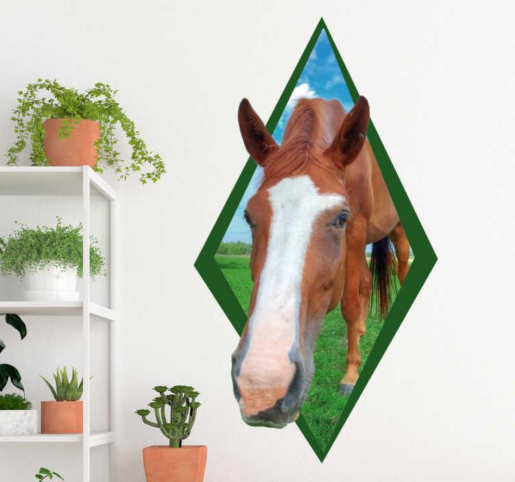 TenStickers. Naklejka z rysunkiem koń zwierzęta. Naklejka 3d na ścianę zwierzęta przedstawiająca głowę konia wychodzącą z ramki! Idealna dekoracja ścienna dla fanów zwierząt, a szczególnie koni!
