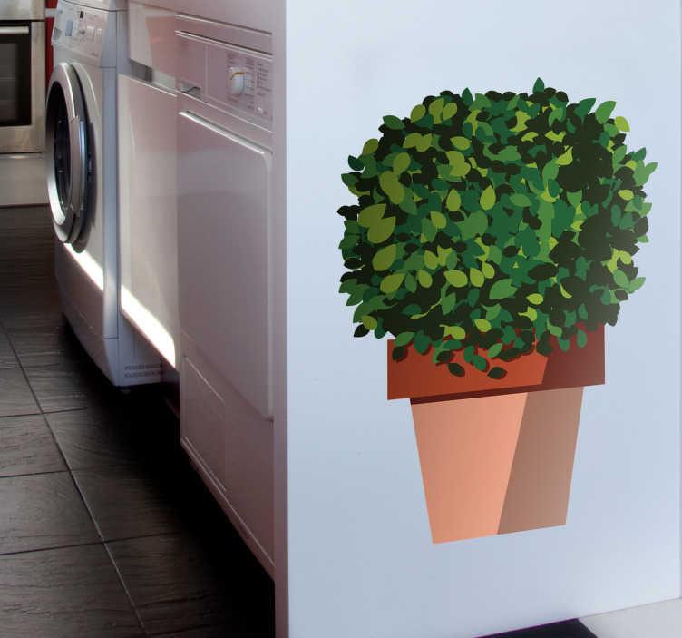 TenStickers. Naklejka z rysunkiem bazylia grecka. Naklejka na ścianę do kuchni, przedstawiająca bazylię grecką! Idealna dekoracja dla wszystkich wielbicieli tej rośliny! Codziennie nowe projekty!
