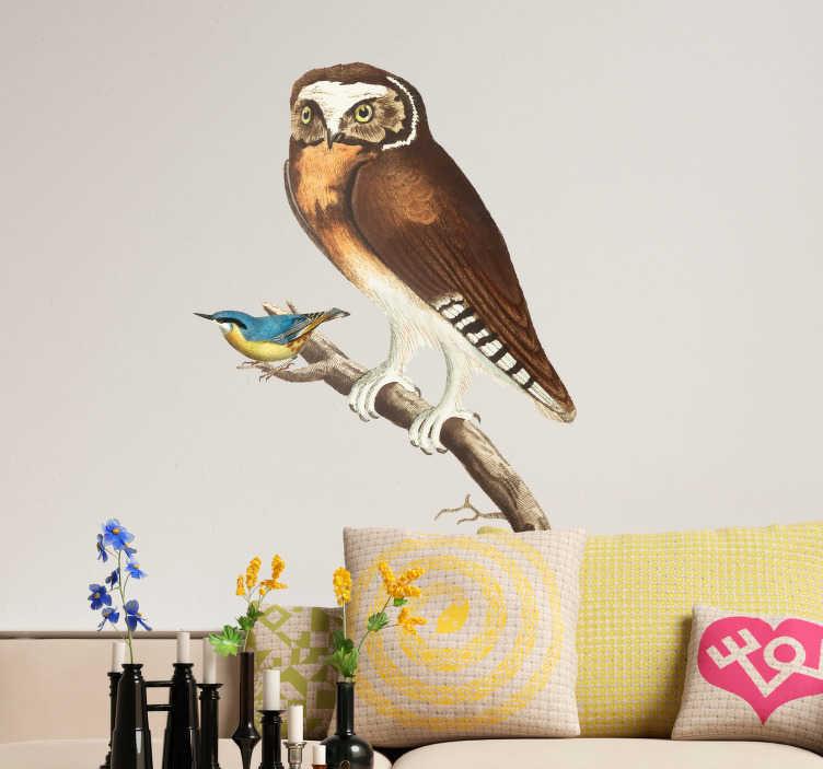 TenStickers. Fototapeta Sowa na gałęzi. Naklejki na ścianę do salonu to nowy trend na oryginalne ozdoby wnętrz. Naklejka przedstawiająca sowę na gałęzi to świetny na dekorację salonu.