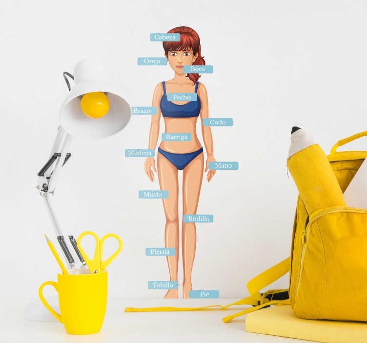 TenVinilo. Vinilo pared anatomía humana partes del cuerpo. Pegatina formada por el dibujo de la silueta de una chica acompañada del nombre de las diferentes partes del cuerpo humano. +50 Colores Disponibles.