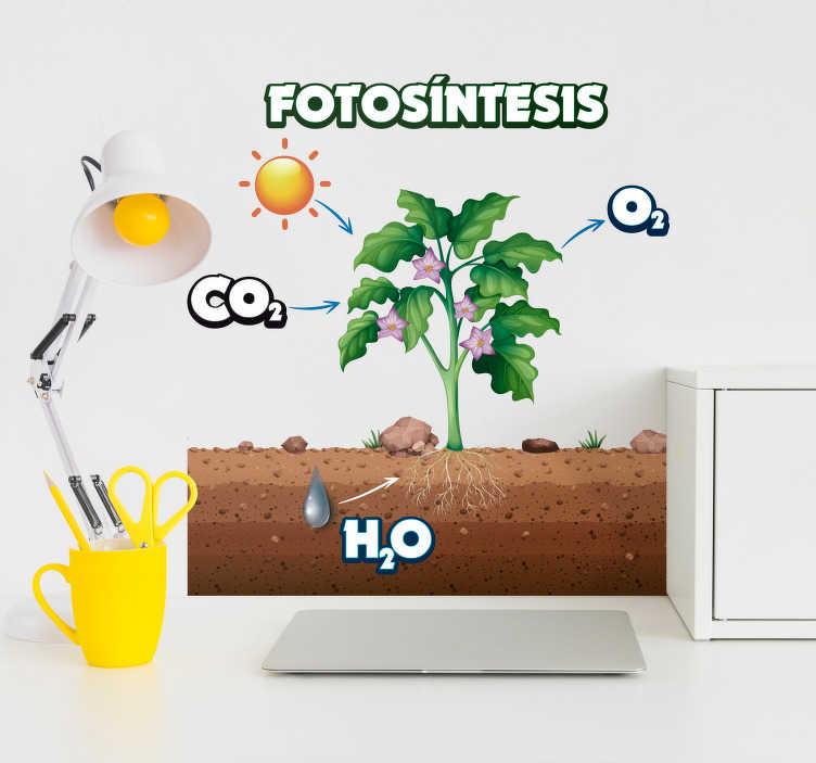 TenVinilo. Vinilo para habitación infantil planta de fotosíntesis. Un vinilo pared educativo original con tema de ciencia para estudiantes. En el diseño hay una ilustración de la fotosíntesis. Fácil de aplicar.