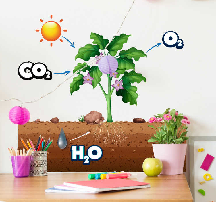 TenStickers. photosynthesis diagram educational wall sticker. Make learning fun and I like the importance of the  welds Flora with this photosynthesis diagram wall sticker. Cheese from a wide range of sizes!
