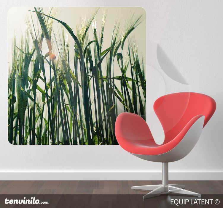 TenStickers. Naklejka zdjęcie pszenica. Naklejka na ścianę w formie fotografii inspirowanej światem natury. Obrazek przedstawia rosnącą w słońcu pszenicę oraz został wykonany przez fotografa Latent Estudi.
