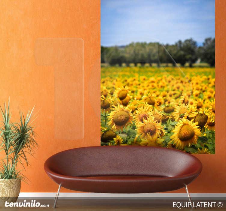 Naklejka uprawa słoneczników