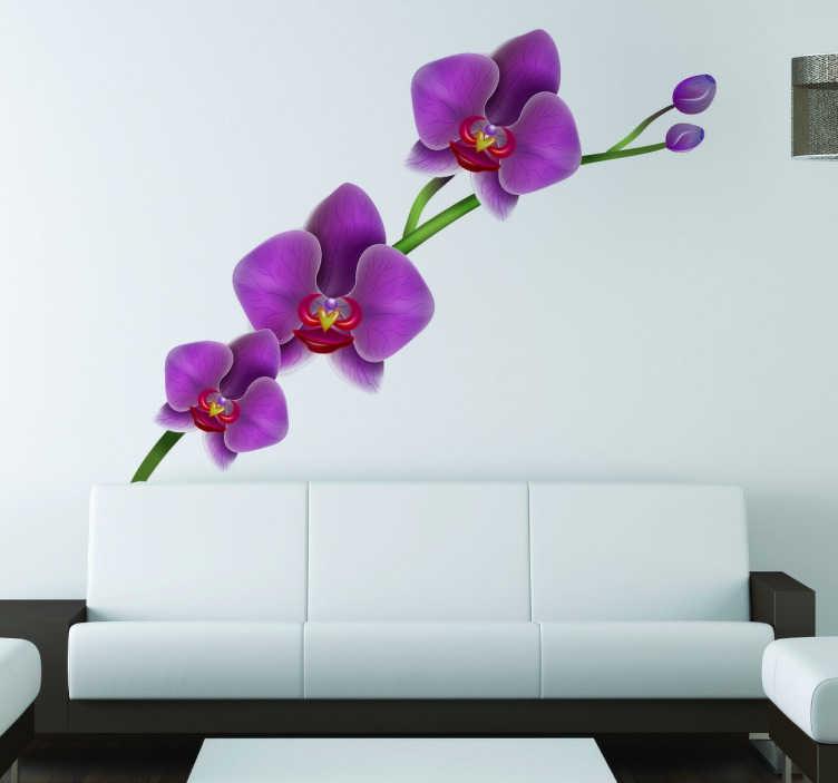 TenVinilo. Vinilo decorativo flor orquidea. Vinilo decorativo de una flor preciosa con un nivel de detalle increíble. Esta orquídea adhesiva quedará genial en las paredes de tu hogar para complementar tu estancia y dejar de ver la típica superficie blanca.