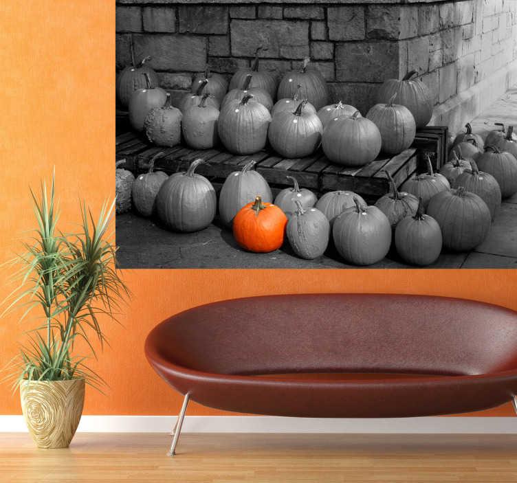 TenStickers. Naklejka na ścianę dynie. Naklejka na ścianę reprezentująca czarno-białą fotografię dyń, gdzie jedna wyróżnia się z pośród innych poprzez swój intensywny, pomarańczowy kolor.