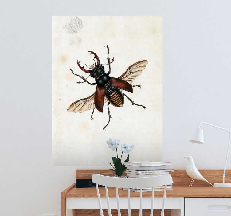 TenStickers. Naklejka na ścianę mucha E. Donovan. Dekoracyjna nakleja na ścianę przedstawiająca ilustrację muchy znanego zoologa - amatora i ilustratora natury Edwarda Donovana