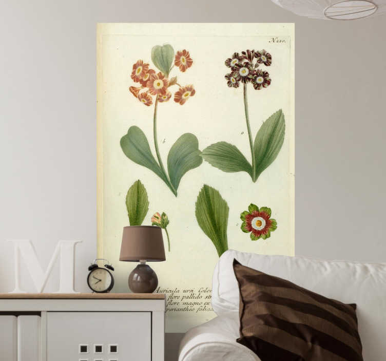TenStickers. Auricula Flower Illustration Sticker. From our collection of photo murals of flowers and plants. A reproduction of an illustration of an old book of botany.
