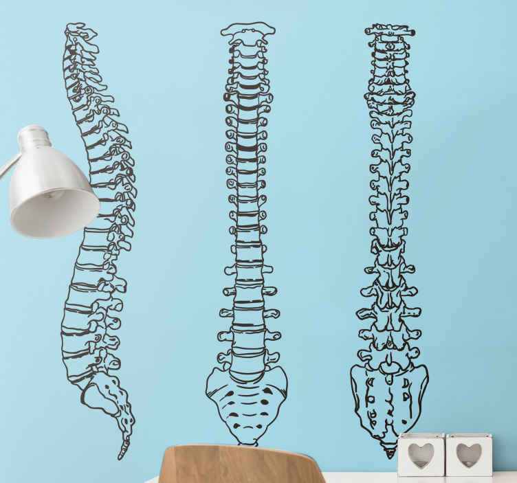 TenStickers. Sticker colonne vertébrale squelette. Autocollant décoratif avec la conception de l'avant, du côté et de l'arrière de la colonne vertébrale.