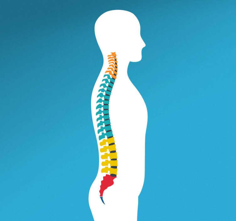 TenStickers. Vertebral Column Wall Sticker. A wall sticker highlighting the vertebral column of the human body!