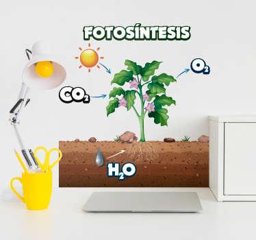 Un vinilo pared educativo original con tema de ciencia para estudiantes. En el diseño hay una ilustración de la fotosíntesis. Fácil de aplicar.