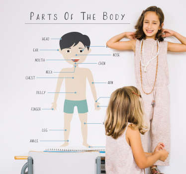 Parts of the body wall stickers for kids