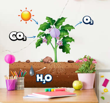 photosynthesis diagram wall stickers for kids