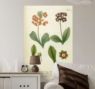 From our collection of photo murals of flowers and plants. A reproduction of an illustration of an old book of botany.