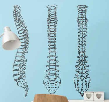Vinilo decorativo columna vertebral línea