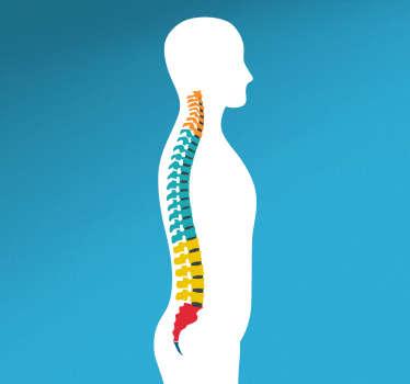 Vinil decorativo coluna vertebral