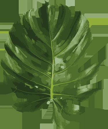 Sticker feuille plante tenstickers sticker feuille plante couleur de votre mur altavistaventures Image collections