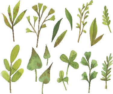 TenStickers. Autocolante decorativo folhas aquarela. Autocolante decorativo ilustrado com uma folhas elegantes em aquarela. Coloque este stiker decorativo de várias folhas na decoração da cozinha.