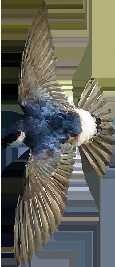 TenStickers. Sticker oiseau polygonal qui vole. Découvrez notre sticker original représentant un oiseau coloré. Il est réalisé de façon polygonale. Idéal pour les amoureux des oiseaux.