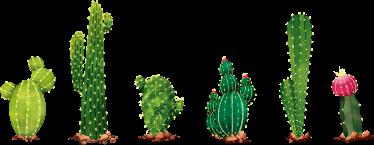 TenStickers. Stickerrand muursticker cactussen. Vinyl stickerrand muursticker met een weergave van verschillende soorten cactussen, een originele manier om elke ruimte van uw huis te versieren.