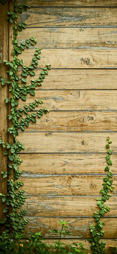 TenStickers. Türaufkleber Holzoptik. Schöner Türaufkleber mit Holz und Efeu, der an den Holzplanken rankt. Schöne Dekorationsidee für alte Türen, die einen neuen Anstrich brauchen.