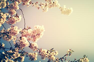 TenVinilo. Vinilo Primavera blooming. Adhesivos para portátiles con una espectacular fotografía de una rama ce cerezo en flor, ideal para personalizar tu laptop a tu gusto.