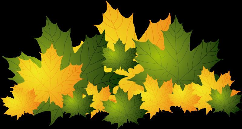 TenStickers. Sarı ve yeşil sonbahar yaprakları. Iş işaretleri - sonbaharın gelişiyle birlikte soğuk ve rüzgar gelir, birçok ağaç yaprakları kaybeder. Bu sonbaharda mağazada sonbahar koleksiyonunuzu göstermek için mükemmel düşen bazı sarı ve kahverengi yaprakların ön camı etiketiyle sonbahar hissini yaşayın.