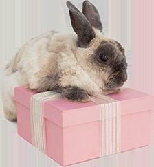 TenStickers. Zajec z darilnimi živalmi na kmetiji. Okrasni živalski stenski stikcer za prostor za otroške spalnice je oblikovanje zajca z darilno škatlo. Na voljo je v poljubni velikosti.