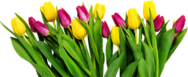 TenStickers. Tulips bouquet window decal. Tulips bouquet window sticker available in any size required to decorate window surface in the home or anywhere of choice.