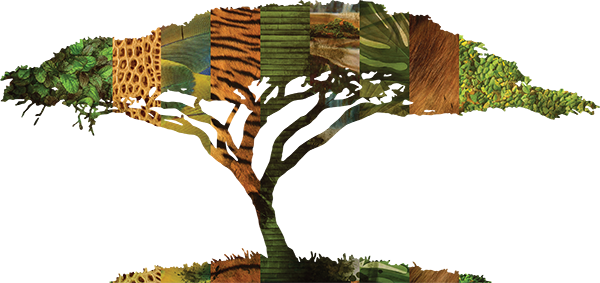 TenStickers. Stenska nalepka džungla živalsko drevo. Prinesite džunglo v svoj dom s to stensko nalepko z drevesnimi in več živalskimi odtisi. Nalepka bo ustvarila pustolovsko in vznemirljivo vzdušje v kateri koli sobi, ki jo postavite.
