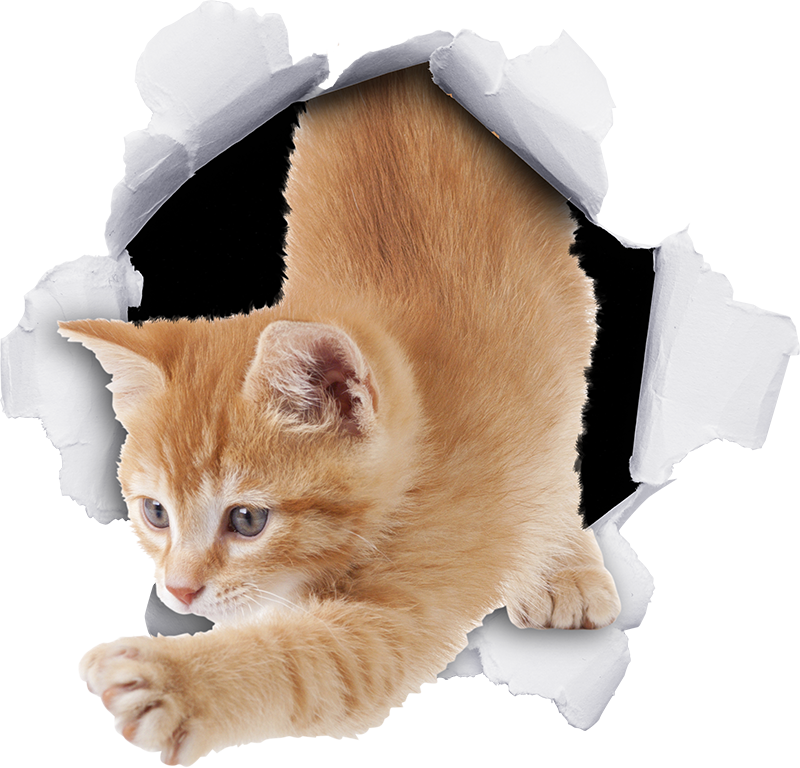 TenStickers. Sticker trompe l'oeil chat. Sticker décoratif pour poubelle avec la conception d'un chat à effet visuel s'échappant d'un mur de papier. Achetez-le dans la taille que vous voulez. Il est facile à appliquer.