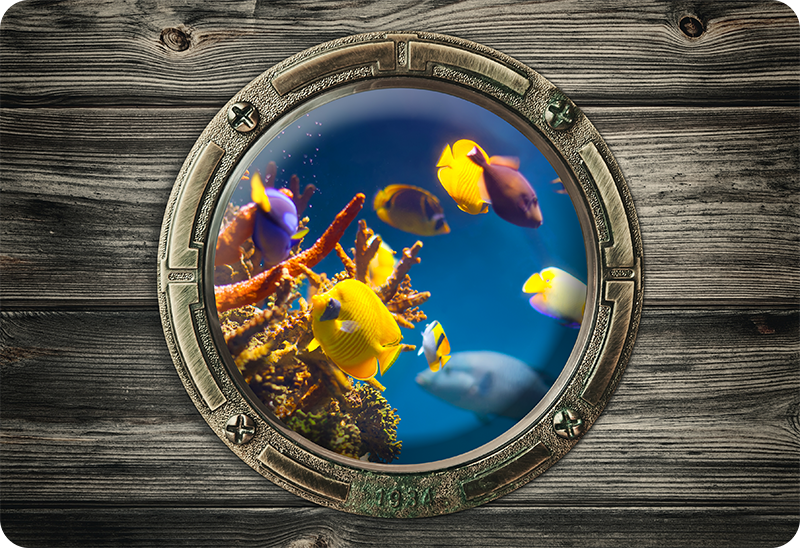 TenStickers. Tropical Fish Laptop Sticker. Become a sailor with this fantastic laptop sticker, allowing you to turn your laptop into a porthole! Sign up for 10% off.