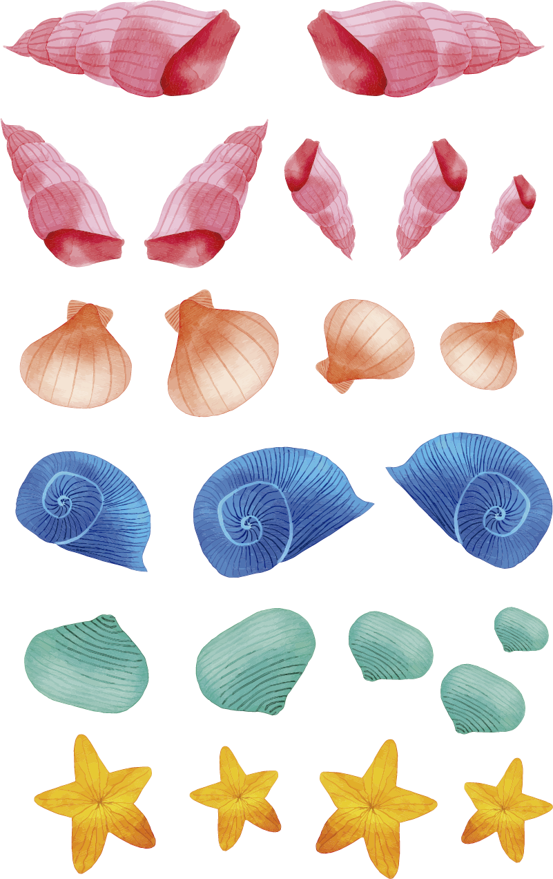 TenStickers. Fish Shells Home Wall Sticker. Go under the sea with this fantastic shell and clam themed bathroom sticker! Available in 50 colours.