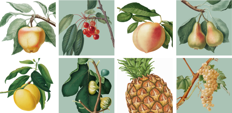 TenStickers. Growing Fruit Wall Sticker. Pay homage to the ancient practice of growing fruit with this fantastic selection of wall tile stickers! +10,000 satisfied customers.