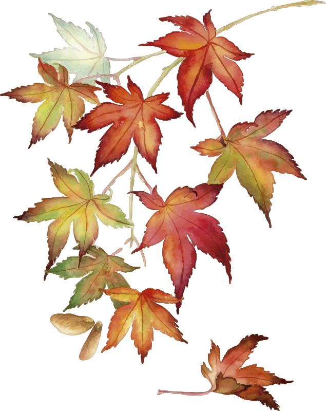 TenStickers. Japanese Maple Leaves Wall Sticker. Pay tribute to the Japanese maple tree with this fantastic wall art sticker! Sign up for 10% off. Extremely long-lasting material.