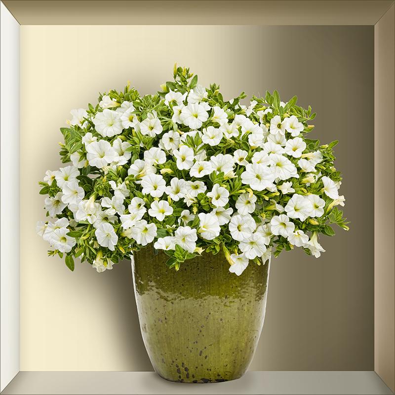TenStickers. Adesivo murale pianta realistica. Adesivo murale 3D incredibilmente realistico raffigurante un vaso con fiori bianchi adatto per arredare il tuo soggiorno o la tua cucina.