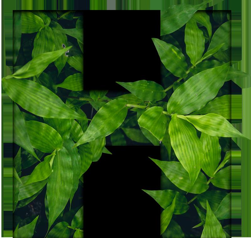 TenStickers. Sticker Maison Lettre Personnalisable. Sticker texte personnalisable plante verte. Idéal pour chambre, salon ou cuisine. Style ornemental naturel. Décoration d'intérieure singulière.
