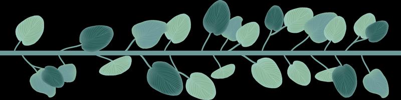 Tenstickers. Eukalyptus jättää reunaseinän tarran. Koristekasvien vinyylireunuksen tarran suunnittelu eukalyptuslehdistä kotiin ja toimistotilaan. Saatavana erikokoisina vaihtoehtoina.