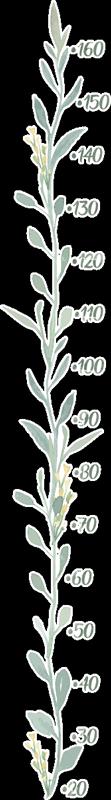 TenStickers. 유칼립투스 잎 (미터) 높이 차트 벽 데칼. 유칼립투스는 어린이 침실 공간을위한 패턴 화 된 미터 높이 차트 데칼을 남깁니다. 적용하기 쉽고 다양한 크기로 제공됩니다.
