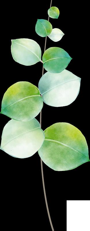 TenStickers. Sticker Maison Eucalyptus. Si vous manquez de plantes dans votre intérieur, ce sticker plante verte de dessin d'eucalyptus sera parfait pour votre salon ou votre chambre