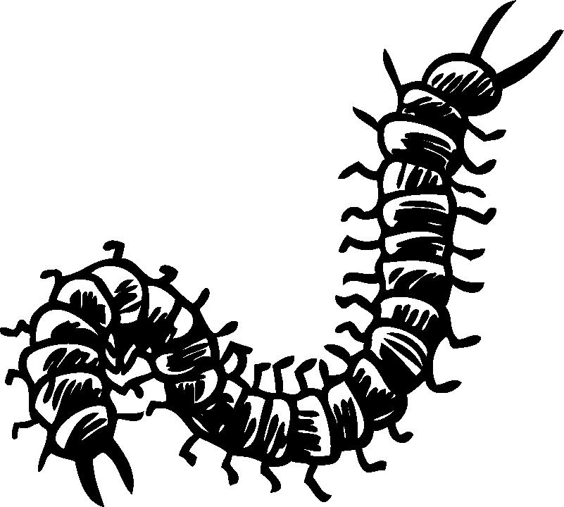 TenStickers. Hundertfüßer wohnzimmer wandtattoo. Zeigen sie ihre unterstützung für die 100 beine des hundertfüßers mit diesem fantastischen wandkunstaufkleber im stil einer bleistiftzeichnung!