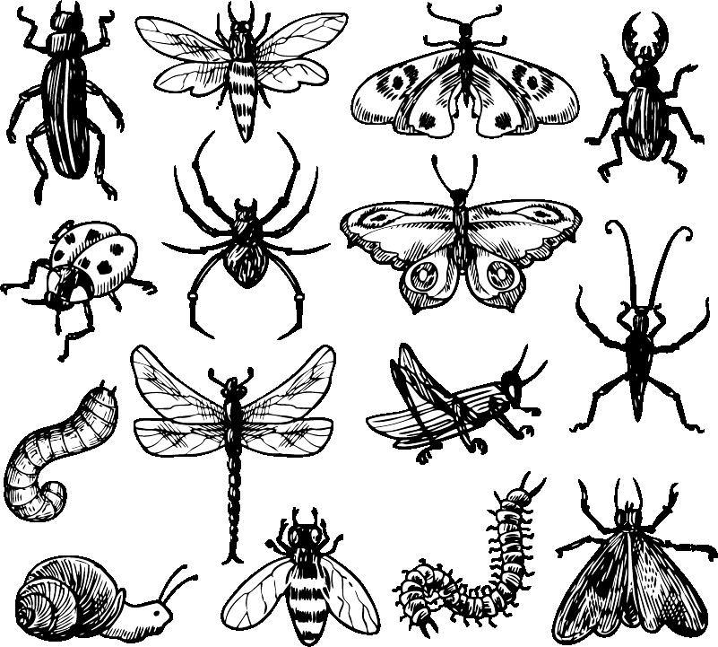 TenStickers. 곤충 키트 거실 벽 장식. 다양한 종류의 곤충을 묘사 한이 환상적인 동물성 벽 스티커 덕분에 곤충 그룹으로 벽을 장식 할 수 있습니다!